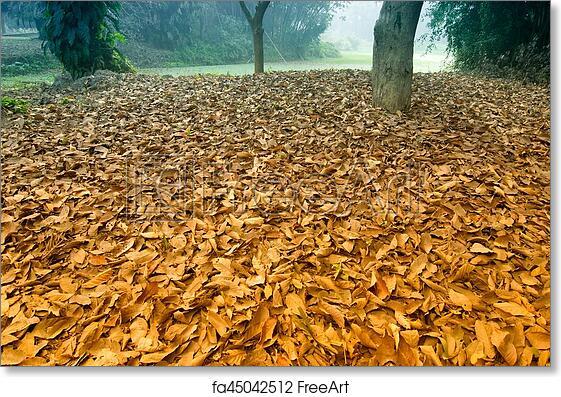 Free art print of Dry leaves on ground, winter scene