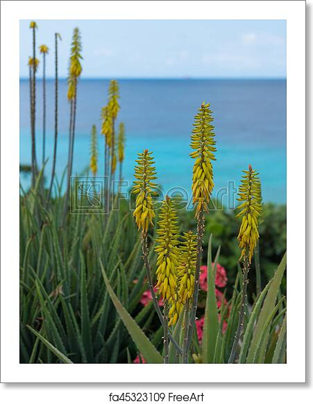 Free Art Print Of Blossoming Yellow Flowers Aloe Vera Plant And