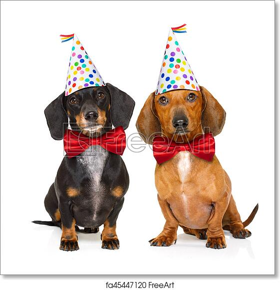 Free Art Print Of Happy Birthday Dog Couple Two Dachshund Or Sausage Dogs Hungry For A Cake With Candles Wearing Red Tie And Party Hat