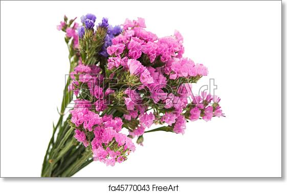 Free art print of statice flower bouquet statice flower bouquet on free art print of statice flower bouquet mightylinksfo