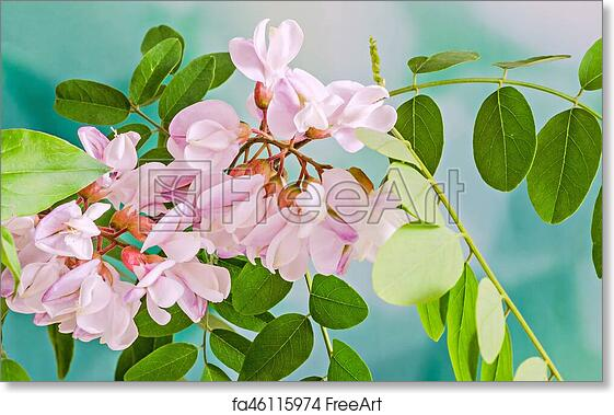 Free art print of pink robinia pseudoacacia tree flowers know as free art print of pink robinia pseudoacacia tree flowers know as black locust genus robinia family fabaceae bokeh background mightylinksfo
