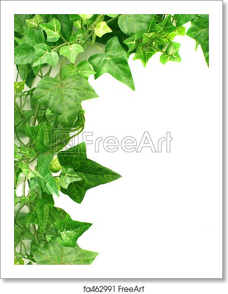 free art print of ivy border botanical green border made of ivy