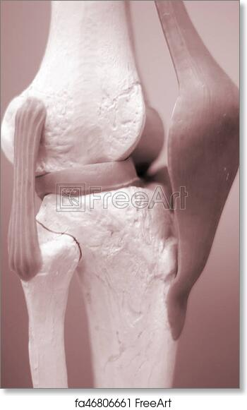 Free Art Print Of Knee Meniscus Medical Model Knee And Meniscus