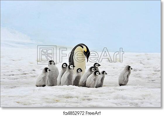 Penguins Arctic Picture SINGLE CANVAS WALL ART Print