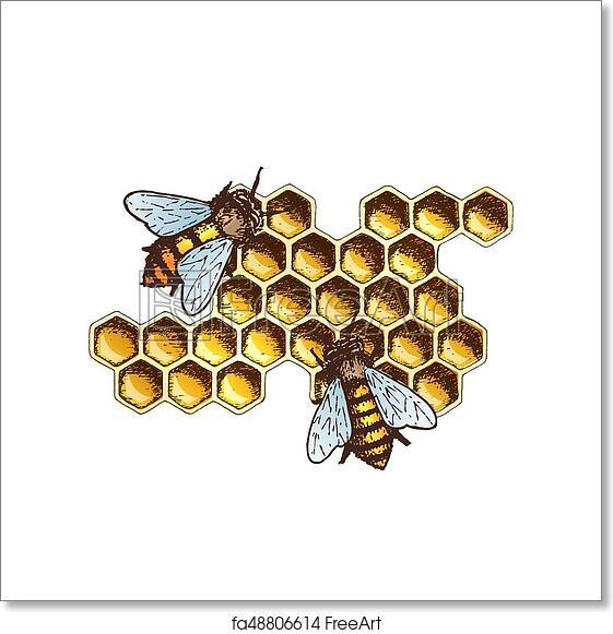 Free Art Print Of Honey Ink Sketch Illustration. Hand