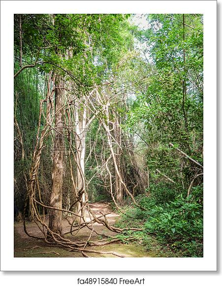 Free Art Print Of Tangled Lianas In The Forest Tangled Lianas In The Jungle Freeart Fa48915840