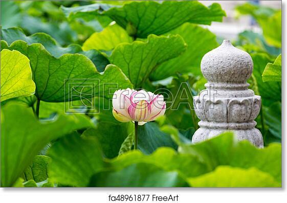 Free Art Print Of Buddha Lotus Flower Lotus Flower Bloom In Pond Of