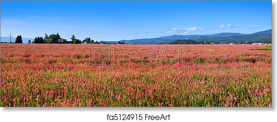 Free Art Print Of Pink Flower Field Panoramic View Of Field Of Pink
