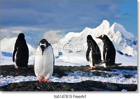 free art print of penguins on a rock in antarctica penguins
