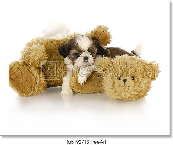 Free Art Print Of Bad Puppy Cute Shih Tzu Puppy Laying Beside