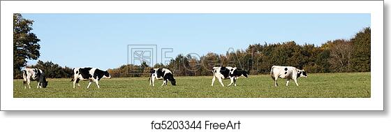 Free Art Print Of Dairy Cows Panorama Banner A Panorama Banner Of A Line Of Black And White Holstein Friesian Cows Walking Across A Pasture Freeart Fa5203344