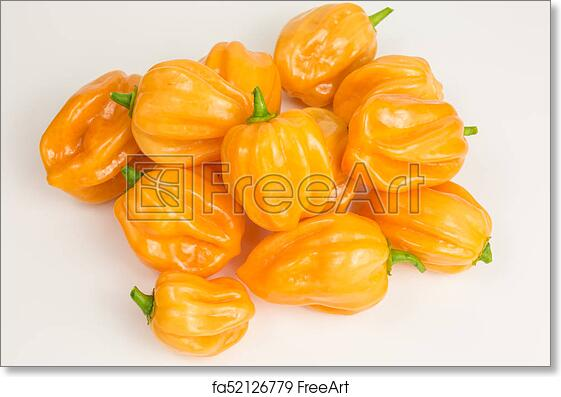 Free art print of Habanero chili pepper