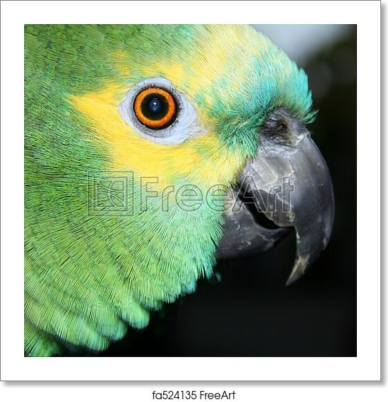 Free Art Print Of Blue Fronted Amazon Portrait Of A Blue Fronted