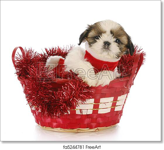 Free Art Print Of Christmas Puppy Shih Tzu Puppy Sitting In Red