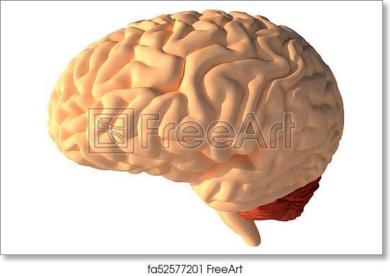 Free art print of Human brain 3D render