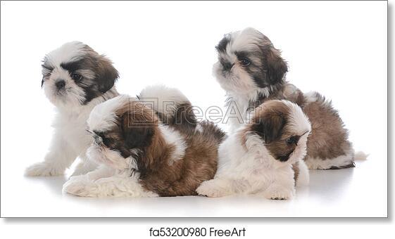 Free Art Print Of Litter Of Five Shih Tzu Puppies Litter Of Five