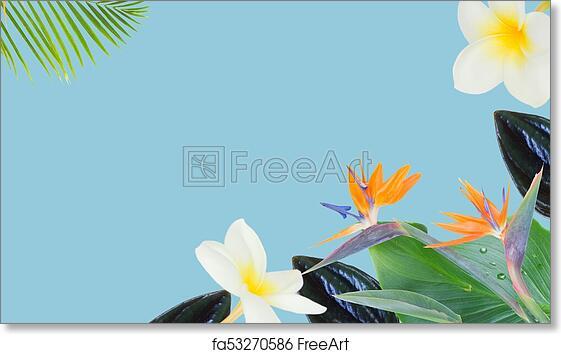 Free Art Print Of Orange Hibiscus Flower Tropical Flowers And