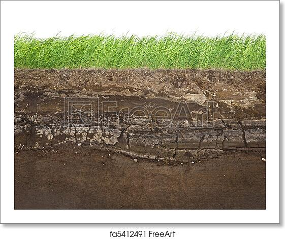 Free Art Print Of Grass And Soil Layers Isolated On White