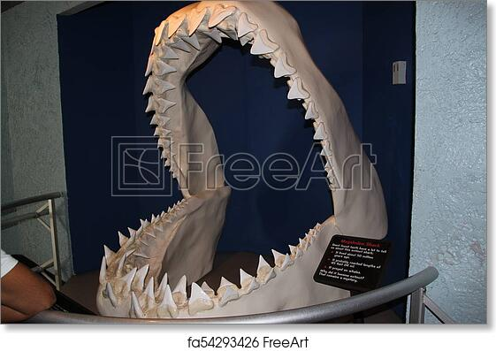 Free art print of Megalodon shark jaws close up  Museum  Tourism   Exhibition  Los Angeles