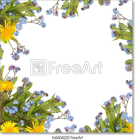 Free Art Print Of Spring Flower Border Dandelion And Forget Me Knot