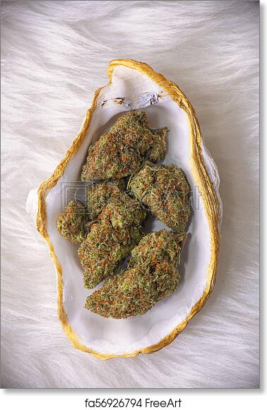 Free art print of Cannabis buds (sour tangie strain) isolated on white  inside a oyster shell