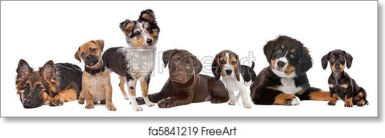 Free Art Print Of Large Group Of Puppies On A White Backgroundfrom