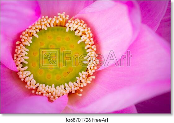 Free Art Print Of Top View Of Pink Lotus Flower In Buddhism The