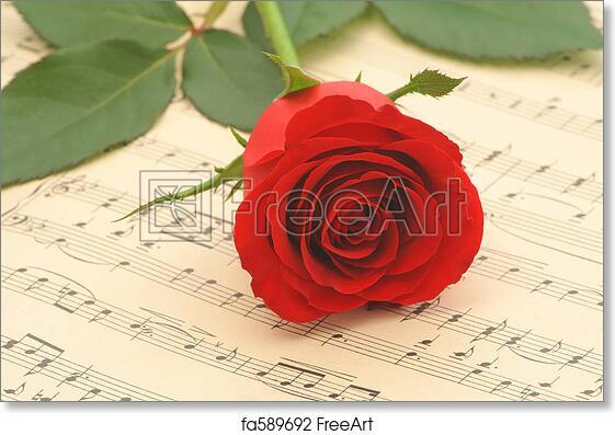 Free art print of Red rose closeup