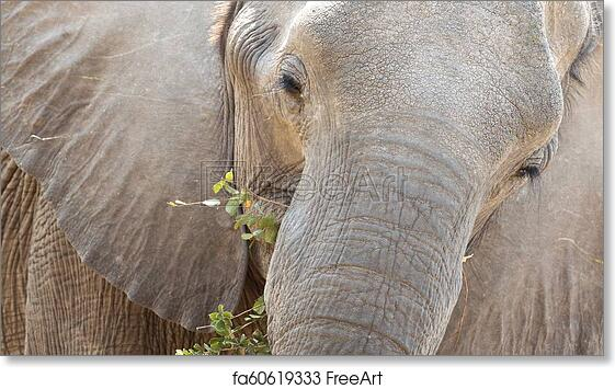 Wall Art Poster Elephant Approach From The Front Art//Canvas Print Home Decor