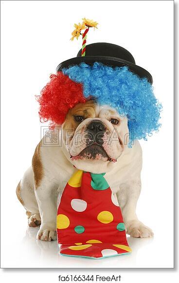 Free art print of Dog dressed like a clown & Free art print of Dog dressed like a clown. Clown - english bulldog ...