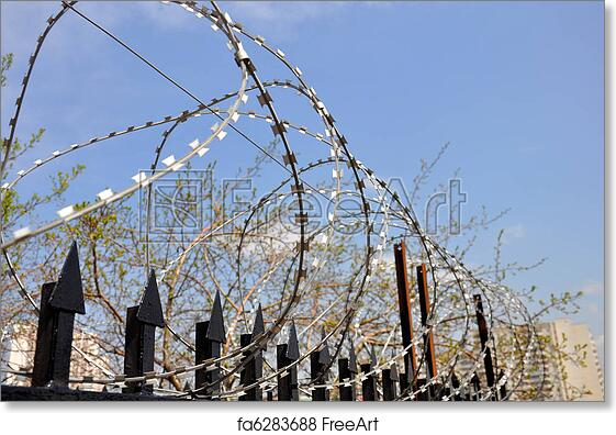 Free Art Print Of Barbed Wire Fence At The Prison Freeart Fa6283688