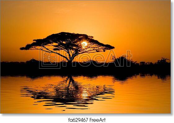 C Acacia Tree At Sunrise Art Print Home Decor Wall Art Poster