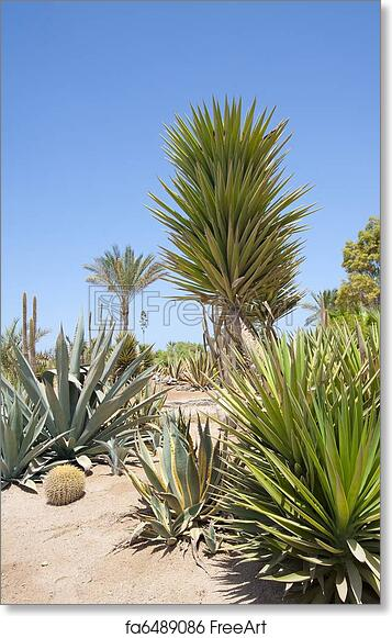 Free Art Print Of Desert Garden With Various Plants A Desert Garden