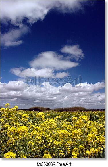 Free art print of mustard flowers under white clouds mustard free art print of mustard flowers under white clouds mightylinksfo