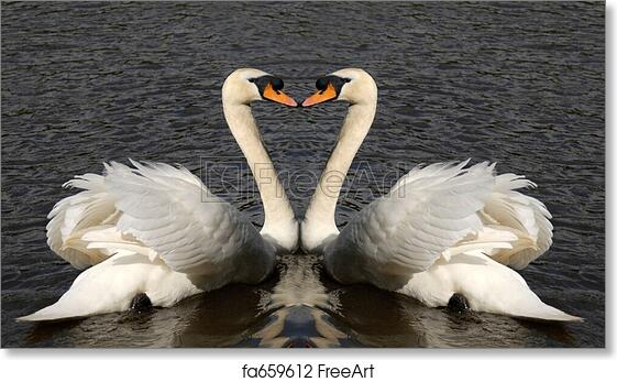 Two Swans Forming Shape Of Heart Photo Art Print Poster 18x12 inch