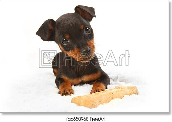 Free Art Print Of Miniature Doberman Toy Pincher Puppy Dog Adorable
