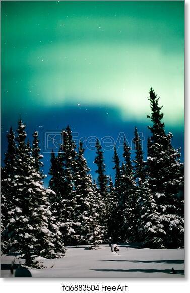 free art print of northern lights aurora borealis and winter forest