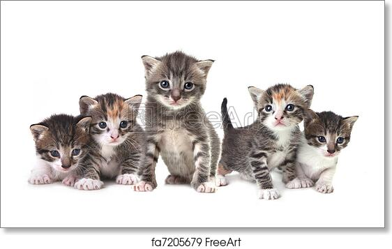 Free Art Print Of Cute Newborn Baby Kittens Easily Isolated On White Adorable Cute Kittens On White Background Freeart Fa7205679