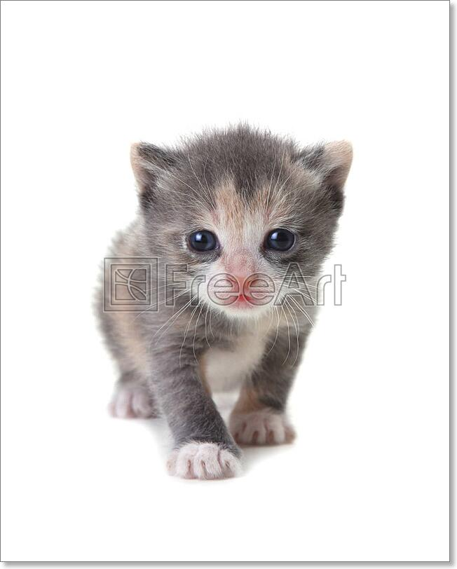 Baby Cute Kitten On A White Art Canvas Print Poster Wall Art Home Decor C Ebay