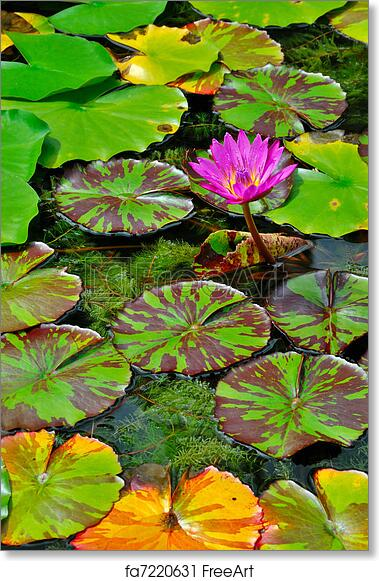 graphic relating to Printable Lily Pads named Free of charge artwork print of Lily Pads