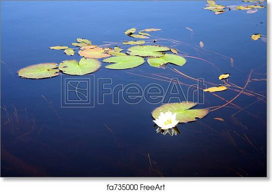 Free art print of lotus flowers lotus flower in hindu iconography free art print of lotus flowers mightylinksfo