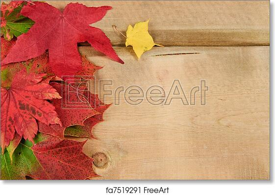 free art print of vibrant autumn fall season leaves on rustic wood