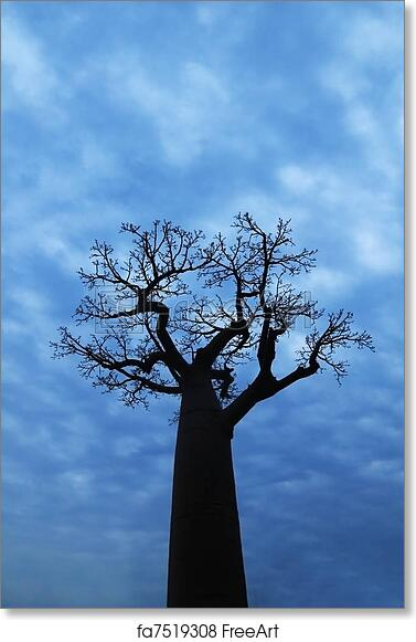 Free Through The Baobab Tree