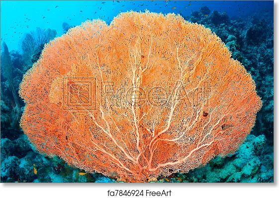 Free art print of hicksons fan coral hicksons fan coral free art print of hicksons fan coral publicscrutiny Images