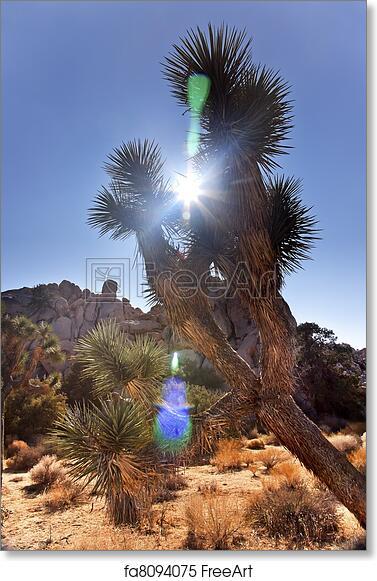 Free Art Print Of Yucca Brevifolia Sun Flare Mojave Desert Joshua