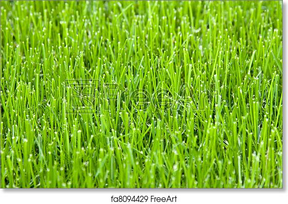 photograph relating to Grass Printable titled Absolutely free artwork print of Reduce gr