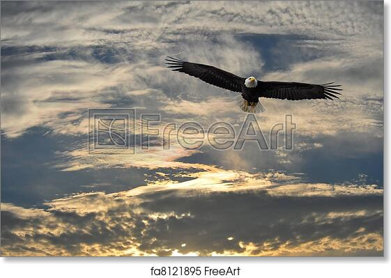 Bald Eagle Soaring Over Water In Alaska
