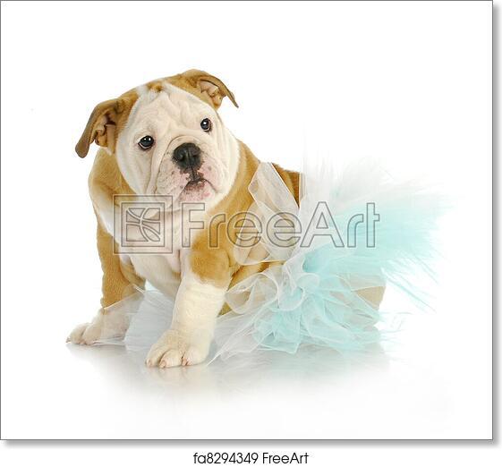 Free art print of Cute puppy