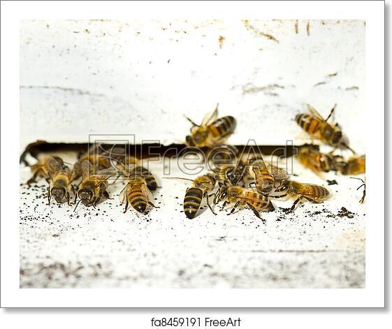 Free Art Print Of Group Of Honeybees On A Vintage Beehive Group Of