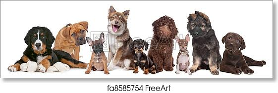 Free Art Print Of Large Group Of Puppies Large Group Of Puppies On
